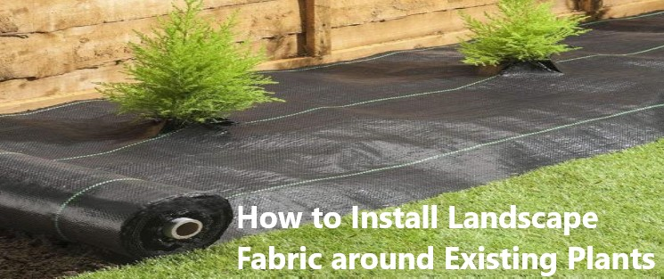 How to Install Landscape Fabric around Existing Plants