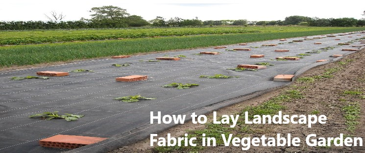 How to Lay Landscape Fabric in Vegetable Garden