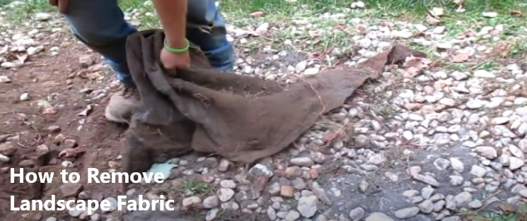 How to Remove Landscape Fabric